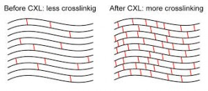 collagen crosslinking